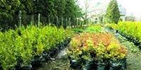 Хочете якісний декоративний садiвний матеріал?