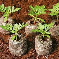 Місячний посівний  календар садівника-городника на березень 2013 року.