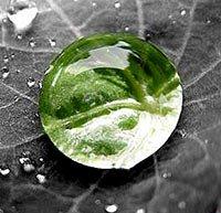 Жива вода для поливу насіння і розсади.