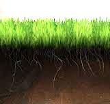 Ґрунт для газону