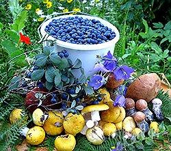 Місячний посівний календар садівника, городника на листопад місяць 2013 року