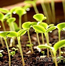 Як купити якісне насіння?
