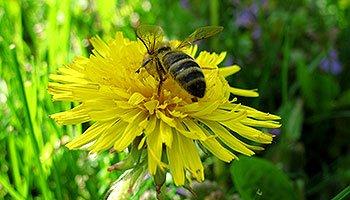 Посівний календар садівника-городника на червень 2014 року