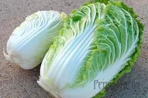 Як вирощувати пекінську капусту