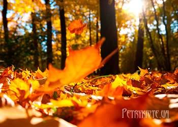 Місячний посівний календар на листопад 2015 року