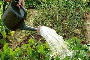 Маленькі хитрощі досвідчених садоводів і городників