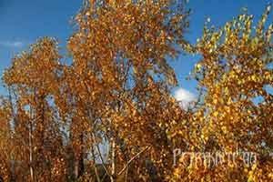 Народний і церковний календар листопад