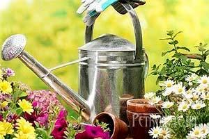 Як поливати розсаду