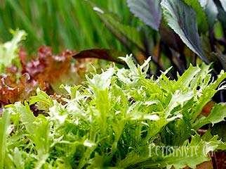 Терміни посіву насіння овочів на розсаду